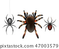 Poisonous spiders species realistic vector set 47003579