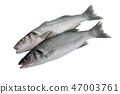 Two Bass fishes on white background 47003761