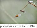 Small Black Ant_Queens, Lasius niger Climbing 2 47003943