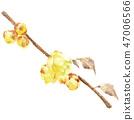 납매, 수채화, 꽃 47006566