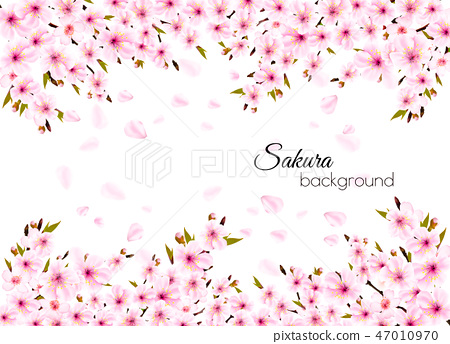 Branches of a blossoming sakura  background.  47010970