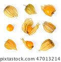 Set of physalis on a white. The form of the top. 47013214
