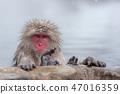 온천에 잠기 원숭이 스노우 몽키 47016359