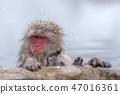 온천에 잠기 원숭이 스노우 몽키 47016361
