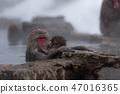 온천에 잠기 원숭이 스노우 몽키 47016365