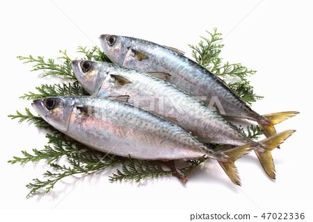 魚鯖魚成分新鮮成分生魚海鮮藍魚DHA EPA 47022336