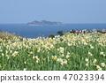 군함 섬과 수선화 47023394