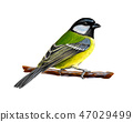 Portrait of a tit bird sitting on a branch on white background, hand drawn sketch 47029499