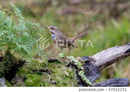 可愛小鳥 47032252