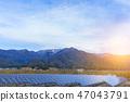 Solar panels (solar cell) in solar farm  blue sky 47043791