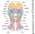 얼굴과 목 주위의 근육 명칭들이 47044820