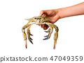 Hand holding a crab isolated 47049359