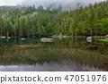 forest, lake, landscape 47051976
