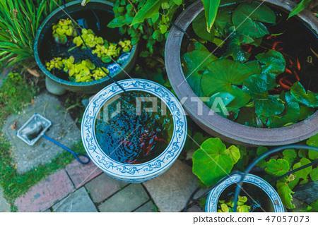 時尚的花園,外部結構 47057073