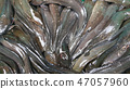魚 動物 釣魚 47057960