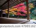 京都南禅寺南禅的秋叶 47065162