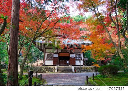교토 지장 원 (대나무 절)의 본당과 단풍 47067535