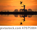 Silhouettes of men and chicken in the sunset 47075884