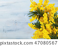 Border of mimosa flowers. 47080567
