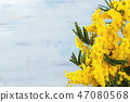 Border of mimosa flowers. 47080568