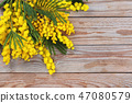 Branch of mimosa. 47080579