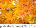 Yellow and red color of falling leaf 47082712