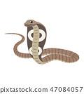 cobra, serpent, icon 47084057