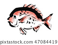 Red snapper 47084419