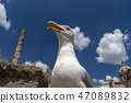 seagull in imperial forums rome 47089832