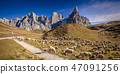 sheep in passo rolle 47091256