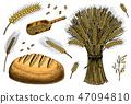 wheat, grain, food 47094810