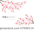 Spring background with Sakura japan cherry branch 47096514