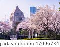 (도쿄도) 벚꽃길과 국회 의사당 47096734