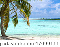 tropical beach with palm tree in french polynesia 47099111