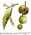 Sweet chestnut leaves and fruit. Watercolor background illustration set. Isolated chestnut 47106177