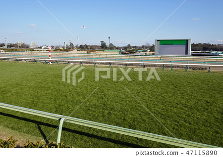 Nakayama Racecourse的草 47115890