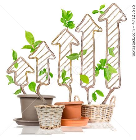 Plant Graph Concept 47123525