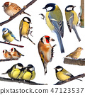 Birds 47123537