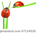 Ladybugs Isolated 47124026