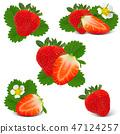 Strawberry Isolated 47124257