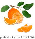 Tangerine Isolated 47124264