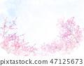 Kawazu ต้นเชอร์รี่ 47125673