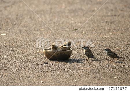 참새,두류공원,두류산,달서구,대구 47133077