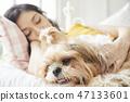 女人寵物的生活方 47133601