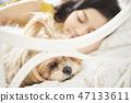 女人寵物的生活方 47133611