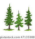 Collection of Some Trees 47135988