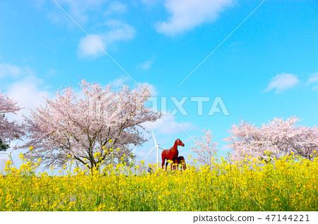 녹산로,벚꽃,유채꽃,도로, 47144221