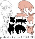 Pig Collection 47144793