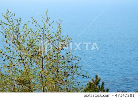 봄, 꽃,도두봉, 47147281