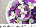 비올라 꽃의 어레인지 47160311